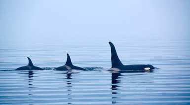 Canada Este Clásico y Safari de Ballenas en Tadoussac
