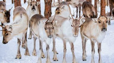 Reyes en Laponia