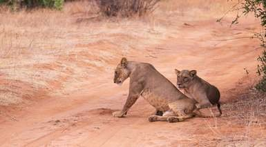 Aventura en Kenia con 3 Safaris