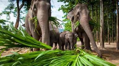 Tailandia al Completo con Río Kwai y Safari