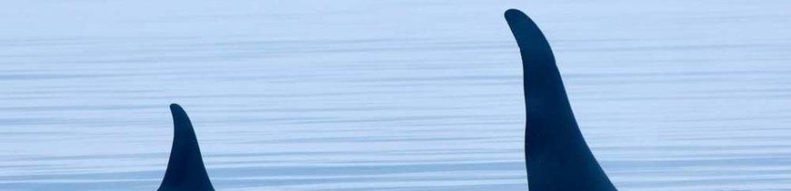 Canadá Este Clásico y Safari de Ballenas en Charlevoix
