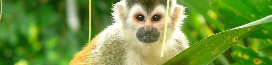 Costa Rica Esencial: Volcán Arenal, Bosque Nuboso y Parque Nacional Manuel Antonio