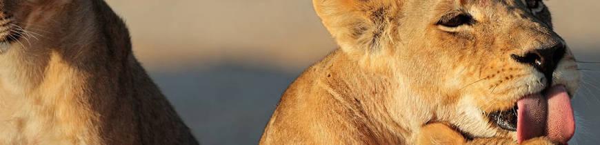 Sudáfrica Esencial y Parques Nacionales